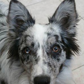Glans Shampoo honden - 300 ml