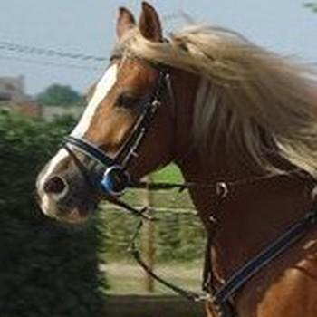 Tobo paarden - 500 ml