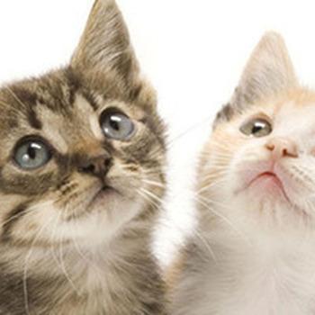 Oogdruppels katten - 50 ml