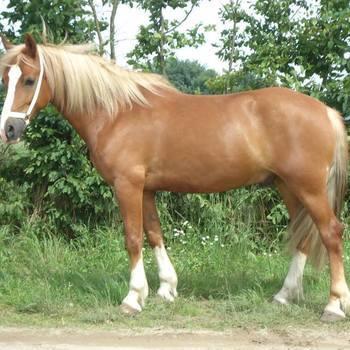 Shampoo glans paarden - 1000 ml